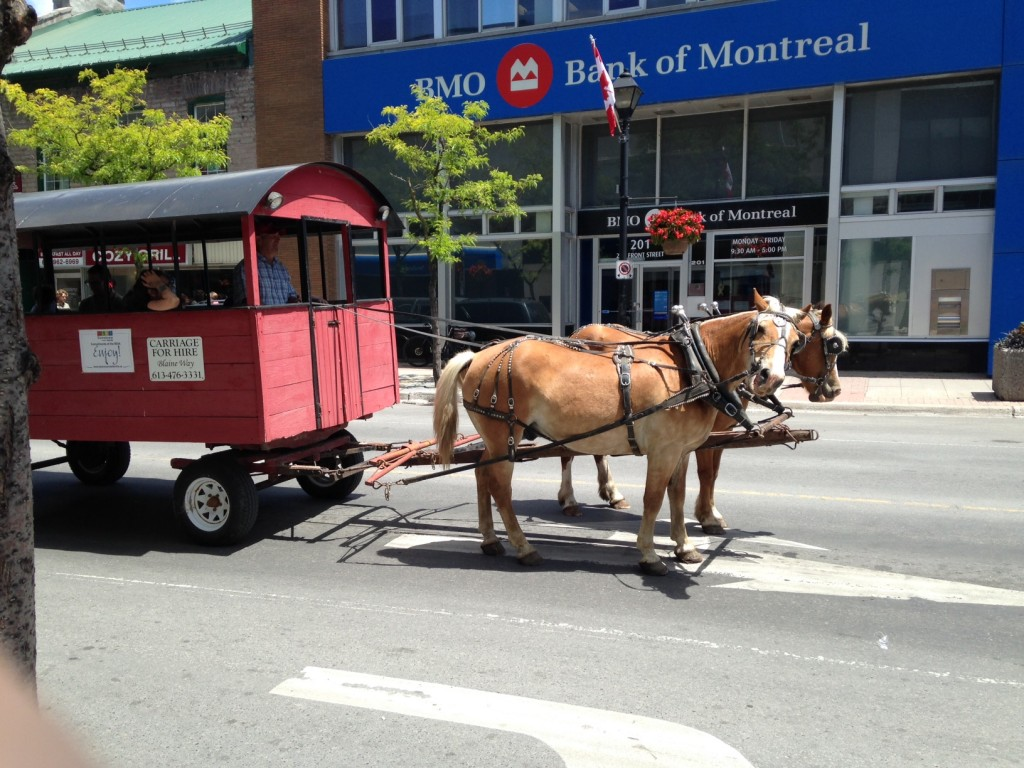 Summerlicious horse and buggy