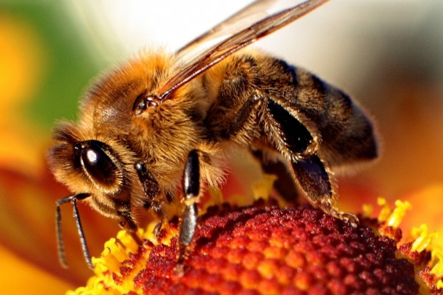 Prince Edward County Council will meet at the end of next month to discuss changing a grass cutting by-law to benefit bees.
