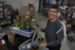"Lindsie Phillips, known as the food bank's garden ""angel,"" helps keep the facility's outdoor garden.  Here, she transplants aloe plants that will be given to clients. Photo by Amanda Lorbetski"